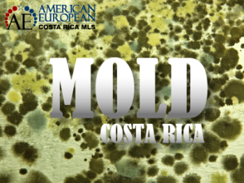 mold in Costa Rican homes